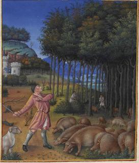 Illustration 1: détail d'une miniature de Jean Colombe (1430-1493): Les très riches heures du duc de Berry, Novembre, 1485-1486. Le tableau représente la glanée, scène paysanne traditionnelle où un porcher lance un bâton pour faire tomber les glands d'un bois de chênes où pâturent ses porcs.